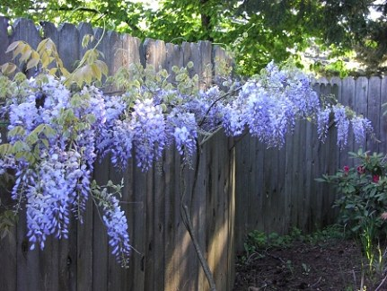 …this is my dream for a back fence!