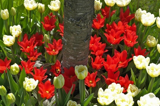 Looking forward to planting bulbs around all the trees for a surprise in the spring!