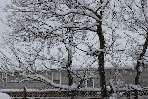 Loved the snowy branches