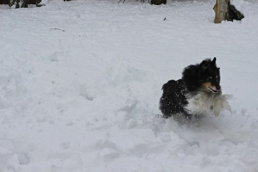 The snow monster in motion...